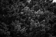 windy (jrockar) Tags: moment snap instant nature mood moody contrast noir arcos holyf fuji x100f fineart slovakia komarno refication movement branches leaves tree foliage abstract longexposure longexpo motionblur blur motion idiot janrockar jrockar windy wind blackandwhite mono bw