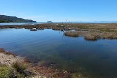 DSCF7160 (nason.sarah) Tags: estuary abel tasman abeltasman coast track coastline new zealand nz newzealand