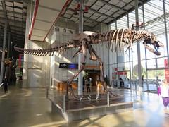 tyrannosaurus 07