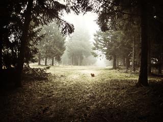 Au ché dans le brouillard