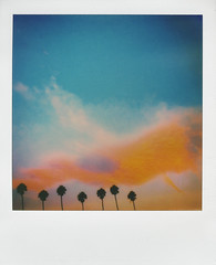 (moucri) Tags: ventura california tree palmtree sunrise polaroid tip theimpossibleproject roidweek roidweek2017