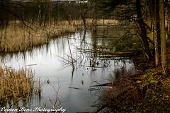 Highland Creek (vernonbone) Tags: 1855kitlens 2016 2017 april d3200 highlandcreek lens ontario birds garden landscape longexposure nikon outside sigma winter
