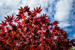 Japanse Tuin Clingendael 2014-02212 (Arie van Tilborg) Tags: japanesegarden denhaag thehague clingendael japansetuin clingendaelestate landgoedclingendael