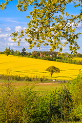 ESSEX SPRING (jonathan manasco) Tags: colour sunshine landscape hall spring seed rape hyde essex fileds