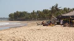 The beach life, Praia dos Nativos, Trancoso, Bahia (maxunterwegs) Tags: brazil brasil brasilien palm palmtree bahia palma palmera palme brsil palmeira trancoso praiadosnativos