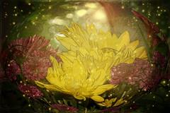 Garden Within an Egg (BKHagar *Kim*) Tags: flowers floral magic egg bkhagar