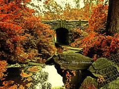 Autumn leaves (schreudermja) Tags: park new york city nyc newyorkcity bridge autumn usa brown water leaves america waterfall leaf nikon manhattan herfst central tunnel brook vs amerika marty d300 waterval schreuder martyschreuder
