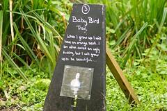 Baby Bird Trail (Rovers number 9) Tags: england birds sony lancashire april a77 2014 rspb rspbleightonmoss sonya77 april2014