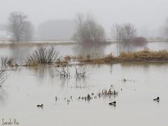 (Sarah-Vie) Tags: img brouillard 3845