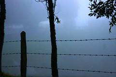 Alambrado en la niebla (TobiTr3s) Tags: naturaleza blanco azul arbol alambrado montaa niebla nube antioquia alambre