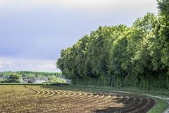 IMG_5270 (Julien Pf) Tags: sky tree nature canon eos rebel 50mm bleu ciel mm t3 f18 18 50 arbre champ 1100d