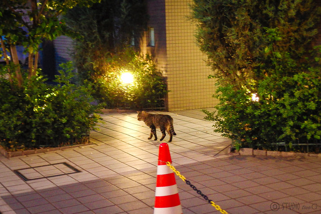 Today's Cat@2014-06-10