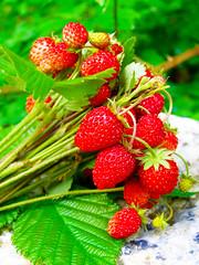 (Alin B.) Tags: nature june spring may mai iunie primavara alinbrotea