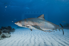 2014 03 TIGER BEACH-2517