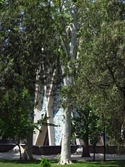 Omar Khayyam Tomb Complex Memorial Neishabur Nishapur Iran (hn.) Tags: copyright memorial heiconeumeyer iran tomb mausoleum khorasan copyrighted gedenksttte omarkhayyam khayyam neyshabour neyshabur khayam islamicrepublicofiran islamicrepublic gedchtnissttte omarkhayam khorasanprovince nishapur neishabur nishabur razavikhorasanprovince neyshapur razavikhorasan islamischerepublic mausoleumofomarkhayyam omarkhayyammuseum omarkhayyamtombcomplex razichorasan razichorasanprovince