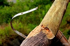 Nada é para sempre,,, (Mandeandrade) Tags: pau árvore madeira galho mandeandrade