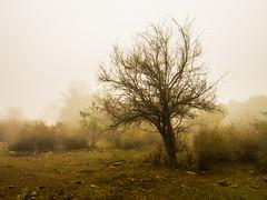 Tree in the mist (VPMPhoto) Tags: chile santiago mist tree fog landscape fuji fujifilm rm greatphotographers xf1