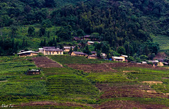 Village on the hill (Black Baron93) Tags: canon landscape village rice terrace traditional vietnam land ricefield minority hmong ethic hagiang hàgiang terracedricefield canon55250 quảnbạ canon600d canonkissx5