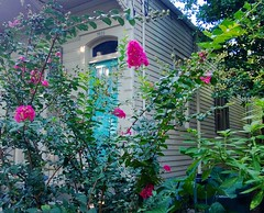 New Orleans: Riverbend: crêpe myrtle (green voyage (falling behind again)) Tags: flowers trees houses summer usa louisiana afternoon neworleans august woodenbuildings cottages shotgunhouses lagerstroemia historicneighborhoods riverbendneighborhood gulfcoastregion historicneighbourhoods crêpemyrtletrees