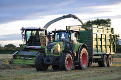 Claas Jaguar 960 Forage Harvester filling a Broughan Engineering Mega Hi-Speed Silage Trailer drawn by a Claas Axion 810 Tractor (Shane Casey CK25) Tags: county city ireland winter red horse irish tractor green field grass work cow hp traktor power cattle cows cut farm cork farming working harvest engineering pit cutting land northside feed farmer jaguar trailer agriculture drawn dairy silage pulling contractor bail harvester filling tracteur trator mega forage fodder trekker 810 claas 960 agri axion ciągnik трактор traktori broughan hspeed