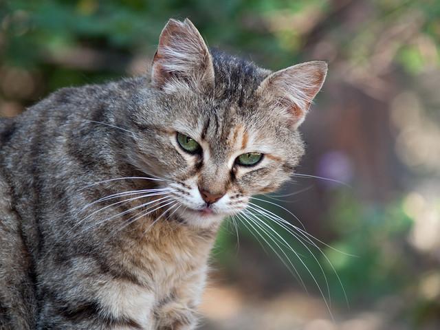 Street cat 62