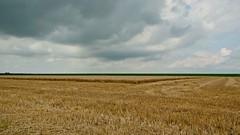 (KirstenDeLaet) Tags: summer sun nature clouds landscape natuur wolken sigma zomer juli polder zon landschap 2014 natuurgebied landbouw akker pentaxk10d f2841770mm ©kirstendelaet