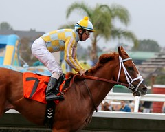 Skyway Wins the Best Pal (kimpossible pics) Tags: horse racetrack jockey horseracing delmar racehorse thoroughbred equine skyway delmarracetrack johnoxley stewartelliott bestpalstakes markcasse