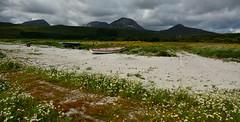 DAS_2946 (shaguarxkr) Tags: wild ferry port ellen goat islay whisky mull distillery chough ardbeg bowmore oa askaig