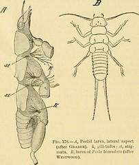 Anglų lietuvių žodynas. Žodis coleopteran reiškia zool. kietasparnis (vabalas) lietuviškai.
