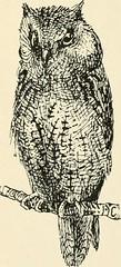 Anglų lietuvių žodynas. Žodis genus ciconia reiškia genties ciconia lietuviškai.