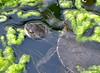 DSC_0286 (RachidH) Tags: nature island hellas greece turtles kefalonia tortue karavomylos rachidh