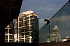A Hot Day in Melbourne (rosewoodoil) Tags: glass architecture buildings australia melbourne victoria 600 heat 700 600views 700views photographedublin
