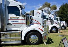 DAYS (quarterdeck888) Tags: trucks transport semi class8 overtheroad lorry heavyhaulage cartage haulage bigrig jerilderietrucks jerilderietruckphotos nikon d7100 frosty flickr quarterdeck quarterdeckphotos roadtransport highwaytrucks australiantransport australiantrucks aussietrucks heavyvehicle express expressfreight logistics freightmanagement outbacktrucks truckies truckshow australiantruckshows 2017truckshows oaklands oaklandstruckshow oaklandstruckshow2017 workingshowtrucks workingtrucks bobtail primemover kenworth t610 t610sar sar newkenworth newtruck