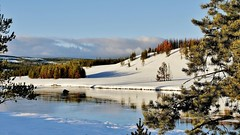 Yellowstone Landscape On A Sunny Dayl (Susan Roehl) Tags: yellowstoneinwinter2017 yellowstonenationalpark wyoming usa landscape longshadows coloredfoliage outdoors winter sueroehl photographictours naturalexposures lumixdmcgx8 35x100mmlens handheld