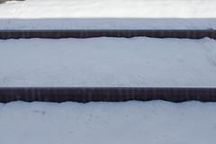 BM7Q0214.jpg (Idiot frog) Tags: winter omiya japan snow