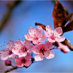 Spring Blossoms #3 thumbnail