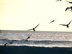 Pássaros (runele39) Tags: paisagens mar praia passaros
