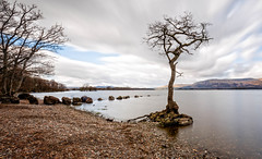 Milarrochy Oak tree, Loch Lomond, Scotland (Catherine Cochrane) Tags: lochlomondandthetrossachsnationalpark scottish nature plant oak oaktrees milarrochybay sky outdoor milarrochy longexposure canon lochlomond balmaha loch scotland tree oaktree water rocks light serene beautiful reflections trossachs