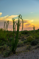 94 of 365 (westindiangal) Tags: night nightphotography landscape az a7ll allrightsreserved arizona nature ©jeanchristopher sony cactus plant sunset