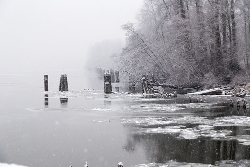 Fraser River Winter