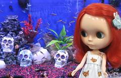 BaD:  14th April 2017 - Fish *2 (Calendar girl 48 / grannygreen) Tags: blythedolls scarlet rougenoir badapr2017 fish neontetra