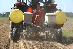 Peanut Planting 6 (UGA College of Ag & Environmental Sciences - OCCS) Tags: uga tifton campus peanuts planting