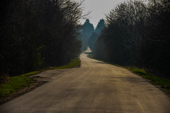 Into the light (Rind Photo) Tags: road abstract lightroom edit depth light denmark trees composition winding