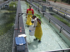 Alchesay-Williams Creek National Fish Hatchery Complex (USFWS Fish and Aquatic Conservation) Tags: volunteers volunteer hatchery fisheries fishandwildlifeservice fishandaquaticconservation