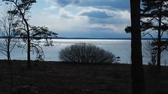 Backlight from the Baltic Sea (mpersson60) Tags: sverige sweden gotland bungenäs hav sea motljus backlight