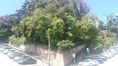 (sftrajan) Tags: taylorstreet russianhill russianhillvallejostreetcrestdistrict nationalregisterofhistoricplaces broadway retainingwall 19thcentury hill steps