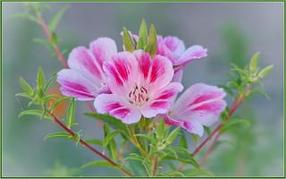 Pink Wildflowers...