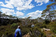 20170301-42-Returning to camp (Roger T Wong) Tags: australia greatpinetier np nationalpark sel1635z sony1635 sonya7ii sonyalpha7ii sonyfe1635mmf4zaosscarlzeissvariotessart sonyilce7m2 tasmania wha wallsofjerusalem worldheritagearea alpine bushwalk camp clouds hike landscape trektramp walk