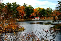 Autumn at Jones' Creek (barbarasimpson_photography) Tags: 1000islands stlawrenceriver jonescreek autum weekend foliage bluesky sunset pretty environment ontario canada sumac dusk trees maples colour red orange white green purple lavender water majestic