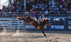 P3110182 (David W. Burrows) Tags: cowboys cowgirls horses cattle bullriding saddlebronc cowboy boots ranch florida ranching children girls boys hats clown bullfighters bullfighting